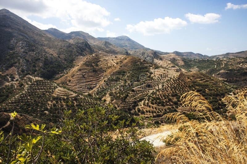 Pendii di collina del terrazzo a Polyrenia, Creta, Grecia immagine stock