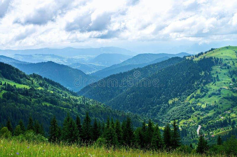 Pendii di montagna, alberi di estate immagini stock