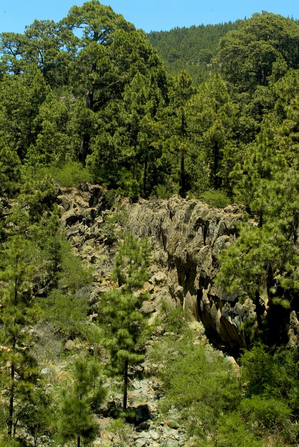 Pendio di collina in Tenerife immagine stock libera da diritti
