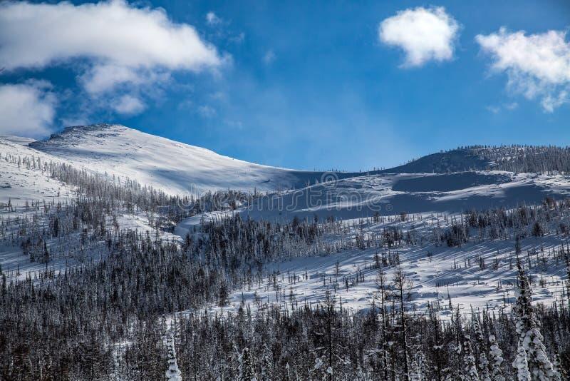 Pendio di montagna e foresta di inverno in tempo soleggiato fotografia stock