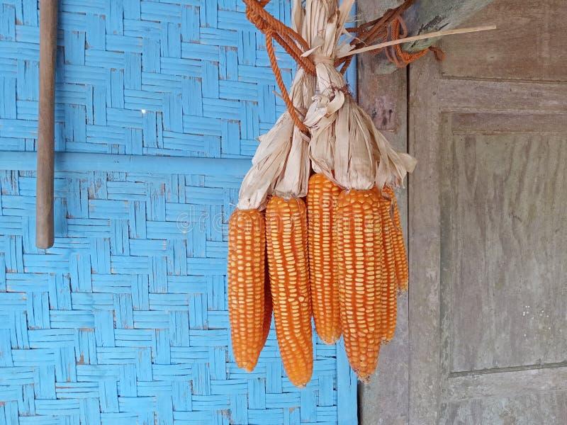 pendure o milho na frente da casa foto de stock royalty free