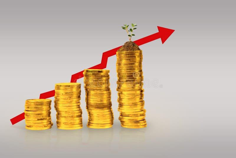 Pengar för guld- mynt för begrepp att växa upp, med grafen som går upp arkivfoton