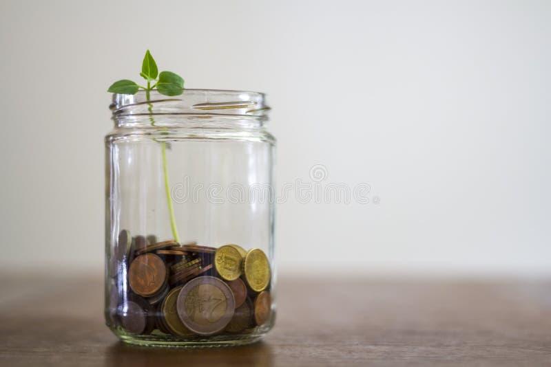 Pengar, i att växa för för exponeringsglaskrus och växt arkivbilder
