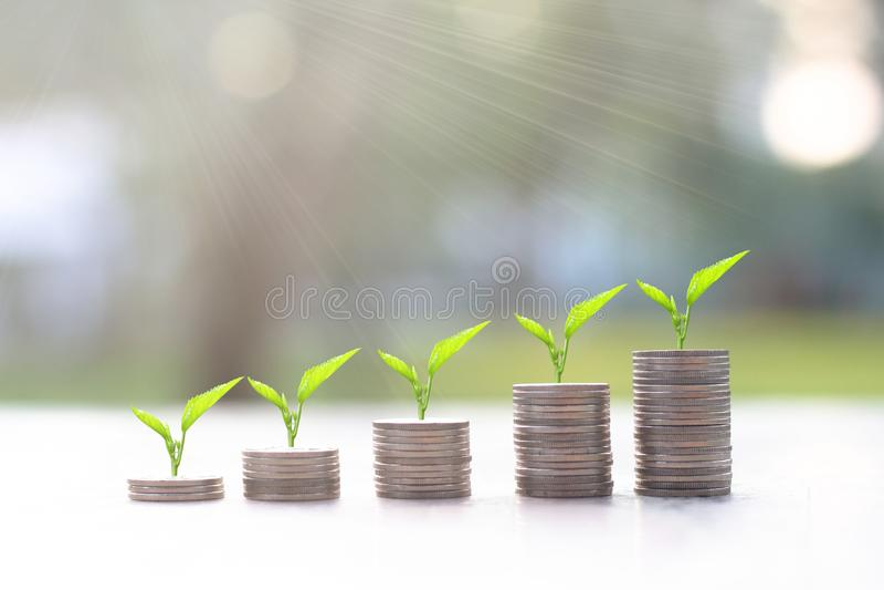 Pengar myntar buntar med trädet som överst växer med solljus coins sparande för stapel för begreppshandpengar skyddande hållbar u arkivbilder