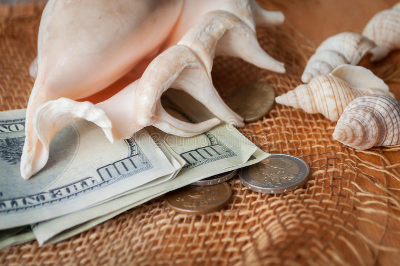 Pengar och skal royaltyfri foto