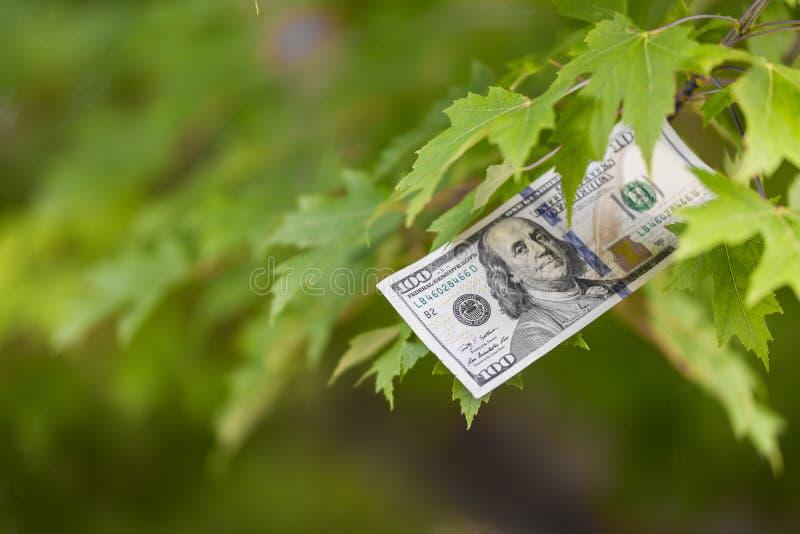 Pengar som växer på trädet, avsalugröda arkivfoto