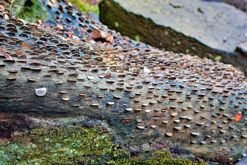 Pengar växer på träd i Goathland, North Yorkshire arkivfoto