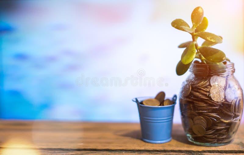 Pengarträd i en glass krus på en suddig bakgrund Affärsidé av framgång royaltyfri bild
