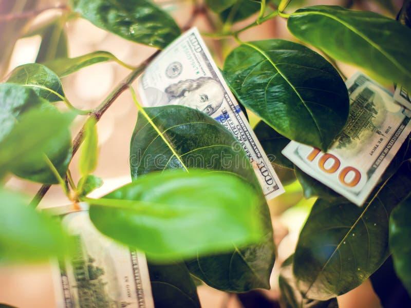 Pengarträd med dollarräkningar på sidor arkivbilder