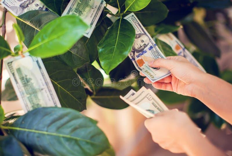 Pengarträd med dollarräkningar som växer på sidor hand mot efterkrav måndag royaltyfri fotografi