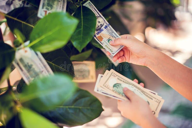 Pengarträd med dollarräkningar som växer på sidor hand mot efterkrav måndag arkivfoto