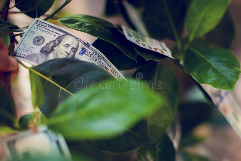 Pengarträd med dollarräkningar som växer på sidor reflexion för pengar för begreppsgodshus verklig royaltyfri bild