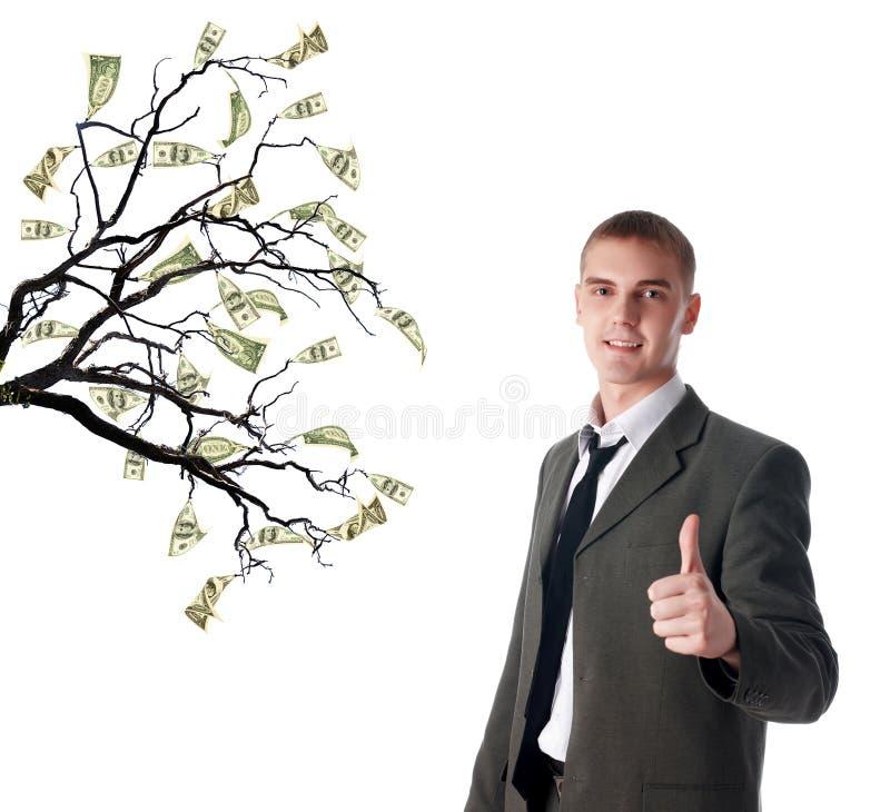 PengarTree arkivfoton