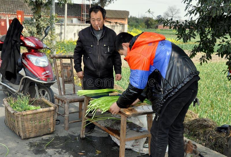 Penghou, Chine : Agriculteurs avec l'ail vert photographie stock