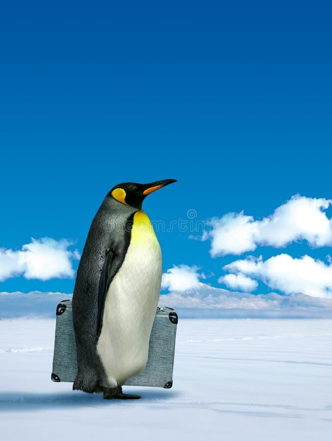 Penguin που προγραμματίζει να αλλάξει τη θέση ελεύθερη απεικόνιση δικαιώματος