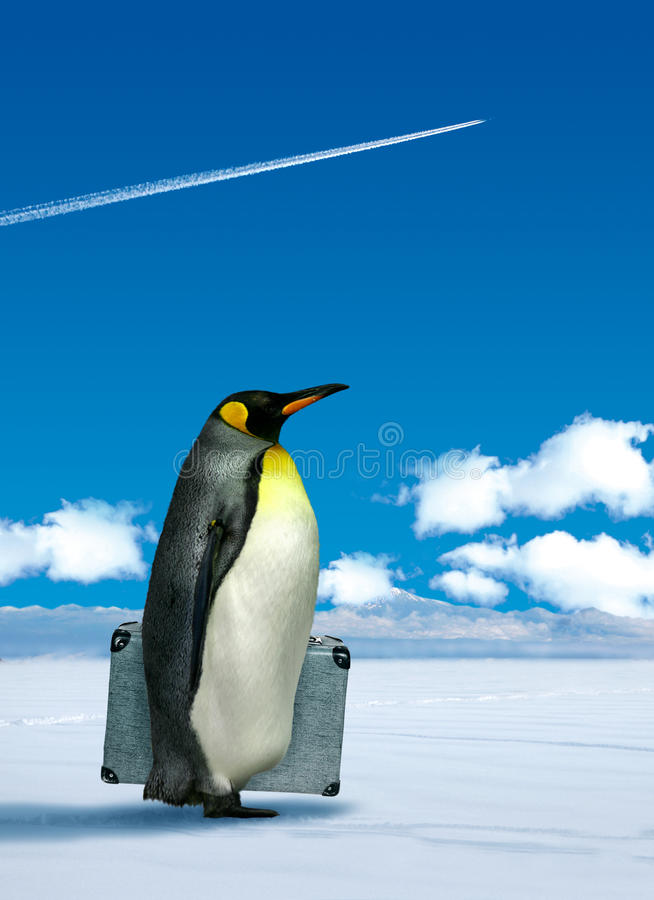 Penguin που προγραμματίζει να ταξιδεψει ελεύθερη απεικόνιση δικαιώματος