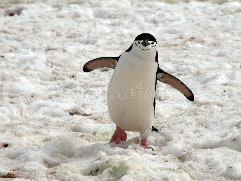 Download Penguin stock image. Image of park, south, penguin, cold - 17875691