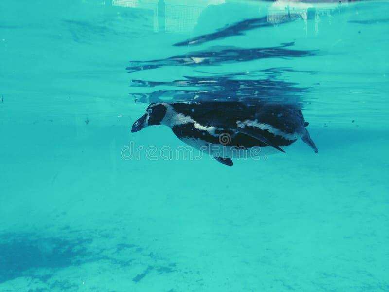 penguin stockbilder