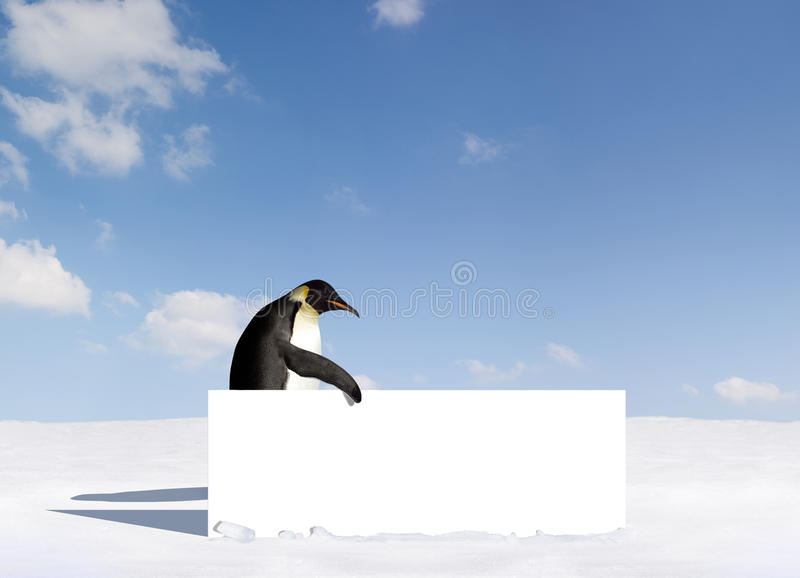 Penguin with Board. A penguin holding a blank white board in Antarctic landscape