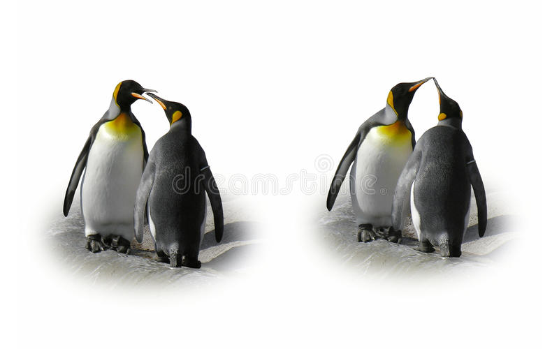 Download Penguin Couple In Love - Flirt, Kiss, Isolated Stock Image - Image: 12030971