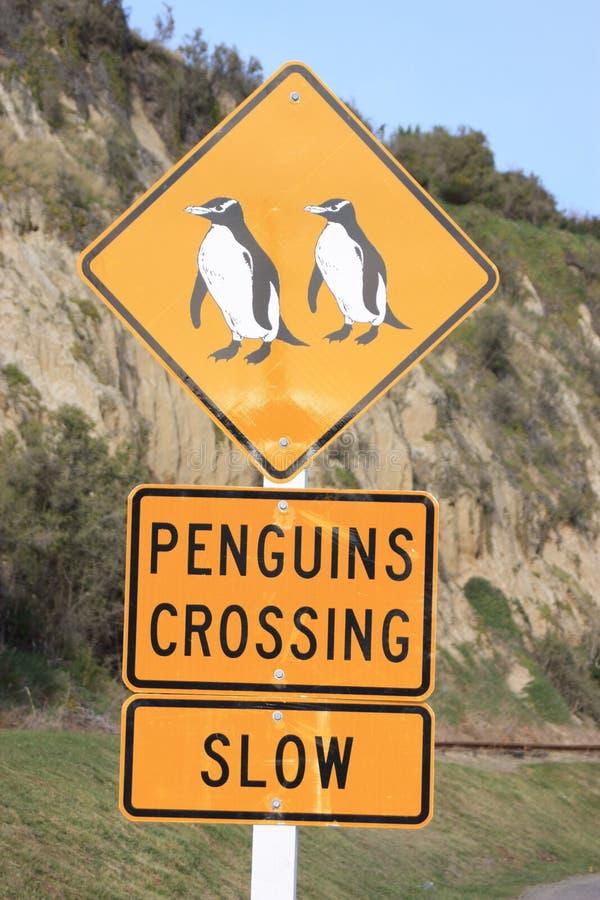 Penguin crossing royalty free stock photos