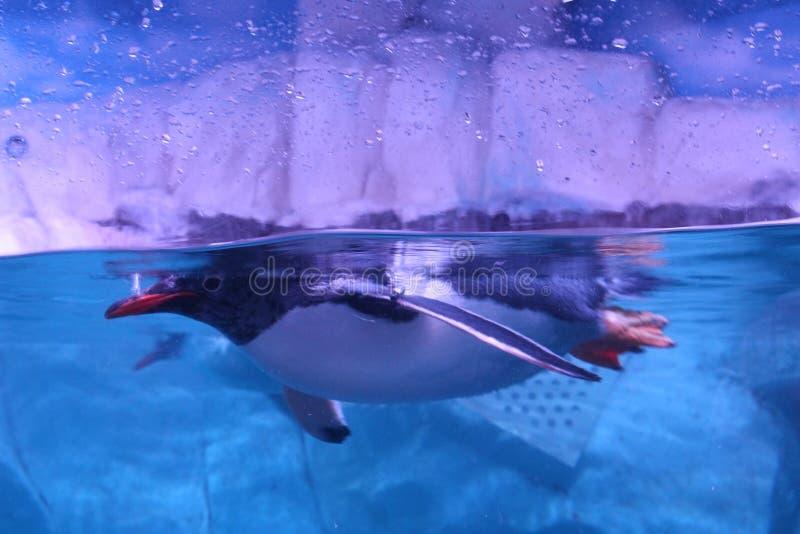 penguin lizenzfreie stockfotografie