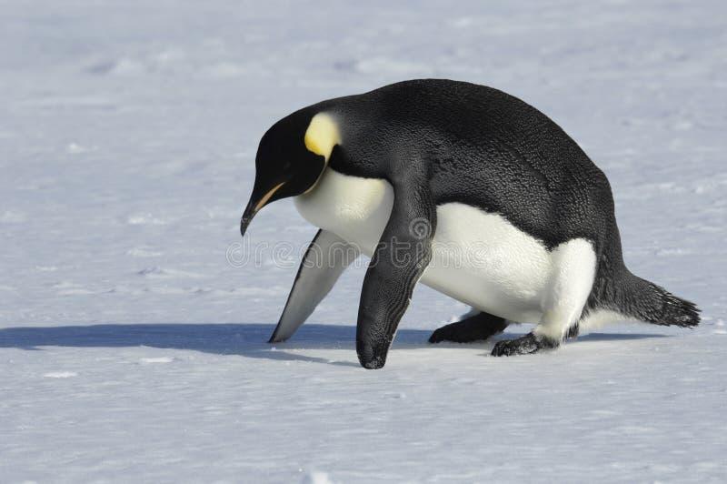 Penguin fitness stock photo