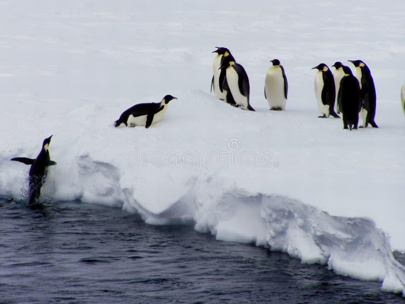 Penguin flies. Penguin jumps on a flow