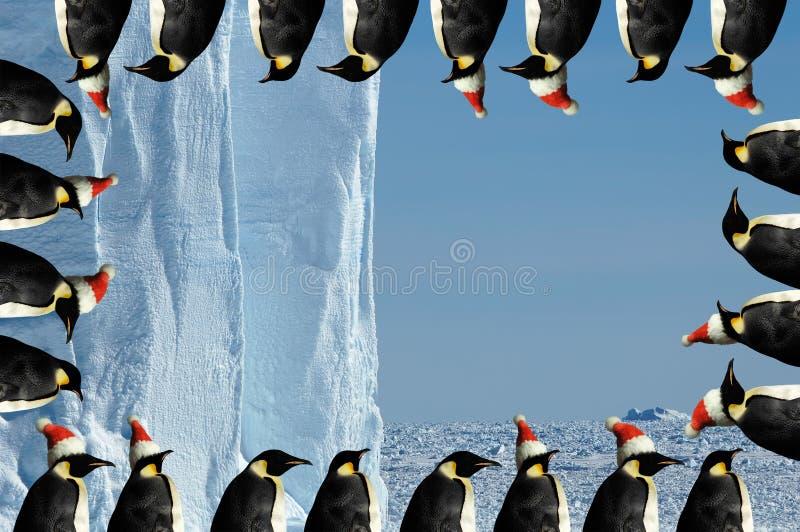 Penguin frame Christmas card