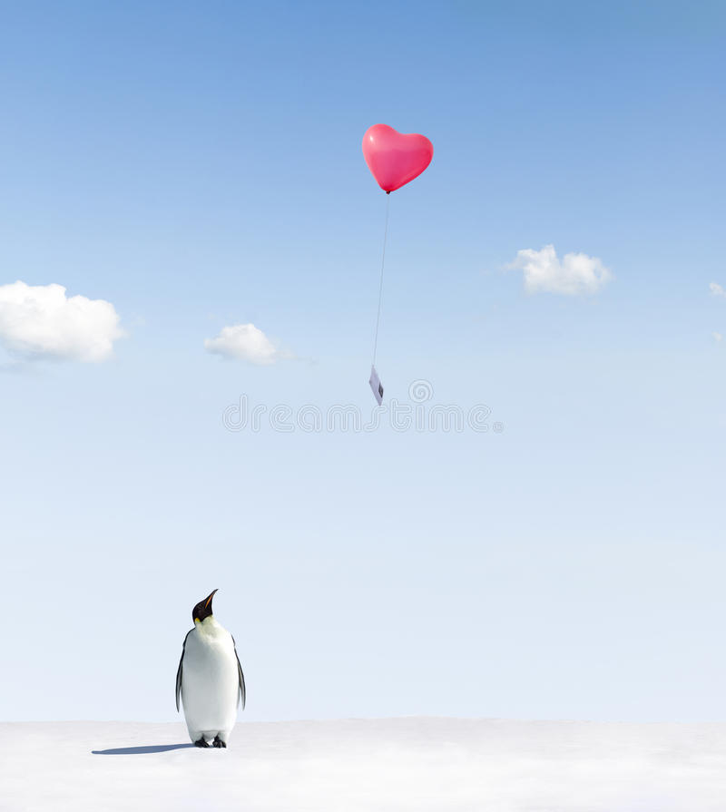 Penguin getting love letter. Emperor penguin on icy landscape watching love heart shaped balloon in blue sky with letter attached royalty free stock photo