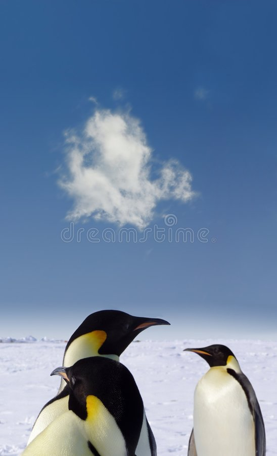 Penguin love. A Penguin couple in Antarctica and a jealouse penguin royalty free stock photography