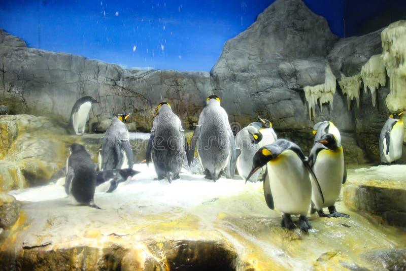 penguin immagine stock libera da diritti