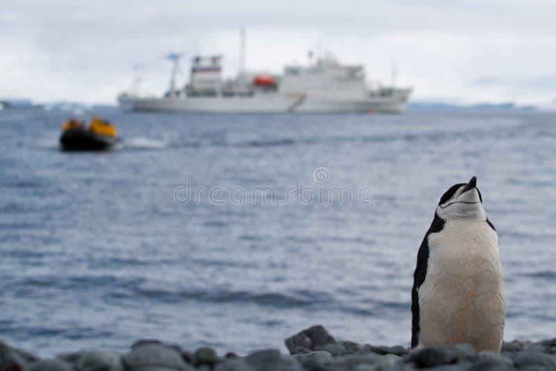Download Penguin stance stock photo. Image of antarctica, zodiac - 18090542