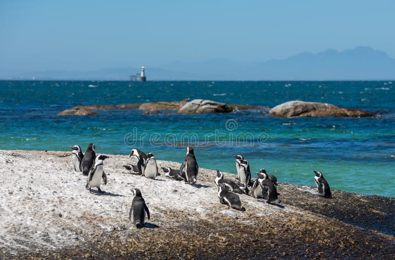 Penguins στην παραλία λίθων στην πόλη Simons, Καίηπ Τάουν, Αφρική στοκ φωτογραφίες