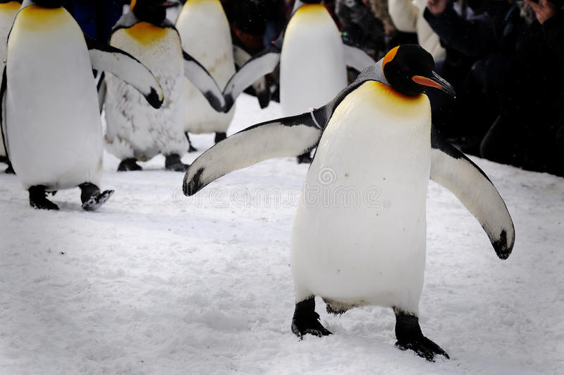 Penguins Μάρτιος στοκ φωτογραφία με δικαίωμα ελεύθερης χρήσης