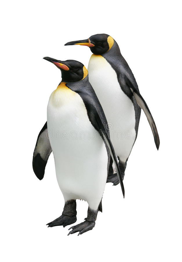 Free Penguins Stock Photography - 13821132