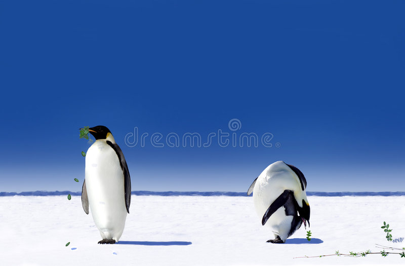 Penguins. Two Emperor penguins standing in the cold stock photography