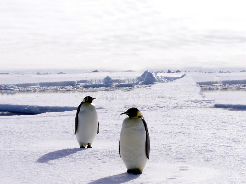 Penguins In Antarctica 2. Two penguins standing in the middle of snow covered Antarctica royalty free stock image