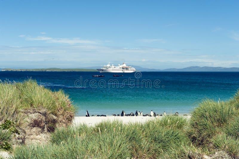 Falkland Islands, penguins at beautiful beach, cruiser on blue ocean stock image
