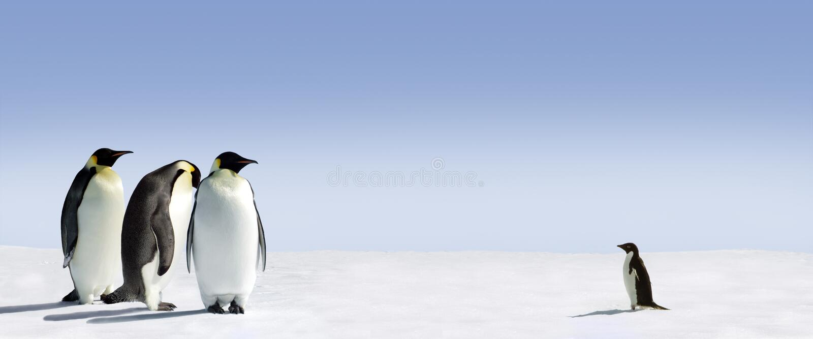 Penguins Meeting. Huge Emperor penguins meeting a small Adelie penguin