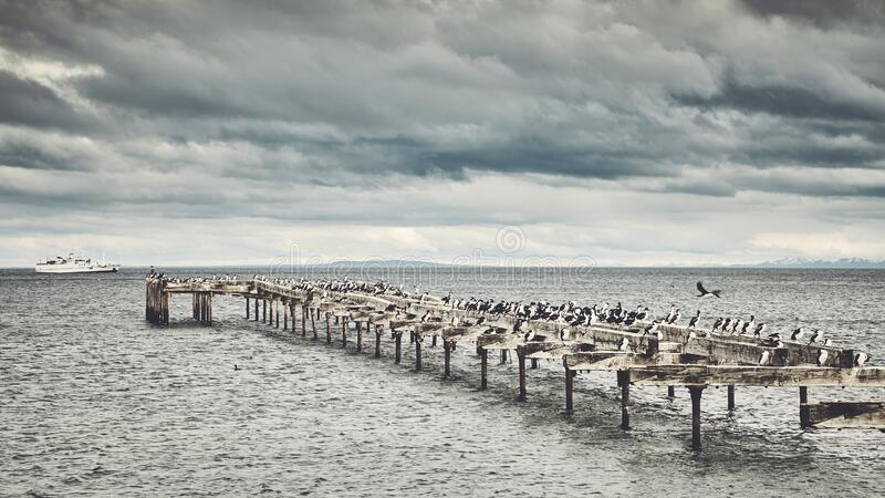 Penguins on an old wooden bridge in Punta Arenas, Chile. Penguins on an old wooden bridge in Punta Arenas, capital city of Chile`s southernmost region stock photo