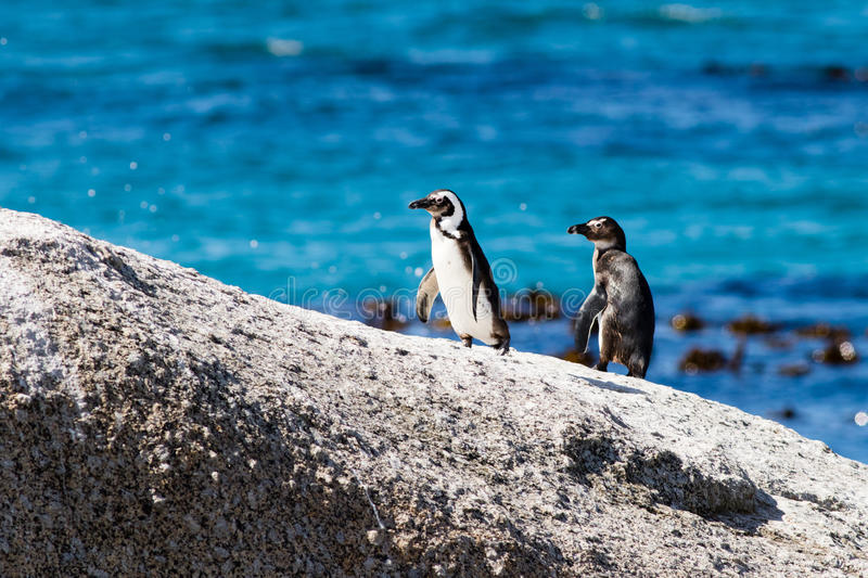 Penguins on a rock stock photo