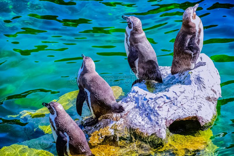 Penguins on a rock royalty free stock photos