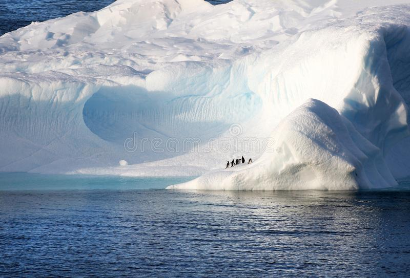 Penguins standing on a huge iceberg. Cavernous blue ice cave. Antarctica Landscape royalty free stock images