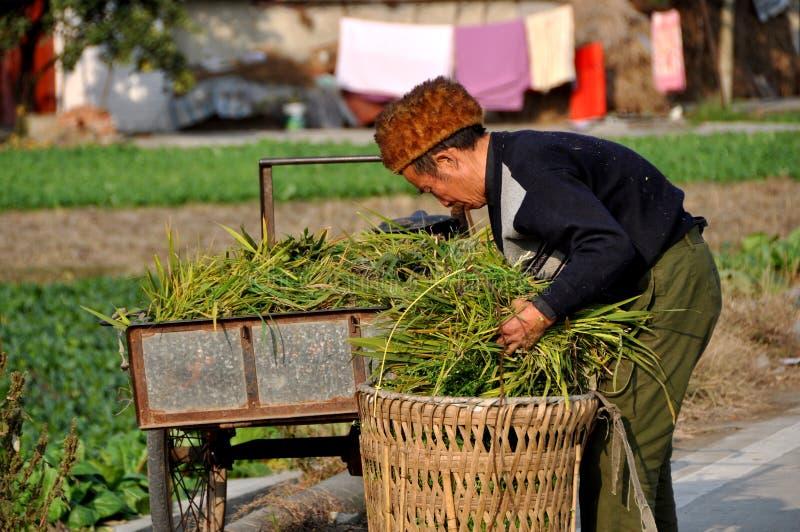 Pengzhou, Κίνα: Αγρότης με τα πράσινα στοκ εικόνες