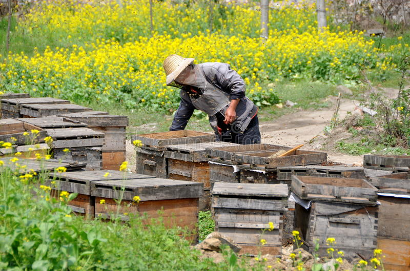 Download Pengzhou, China: Beekeeper With Hives Editorial Stock Image - Image: 24147149