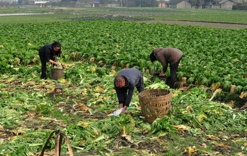 Pengzhou, China: De Arbeiders van het landbouwbedrijf op Gebied royalty-vrije stock afbeelding