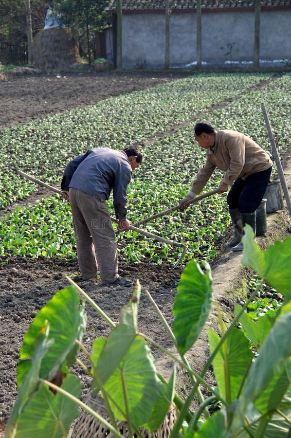 Pengzhou, China: Dos granjeros que trabajan un campo imágenes de archivo libres de regalías