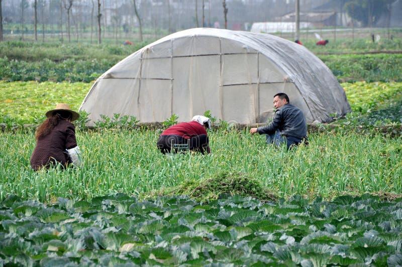 Pengzhou, China: Familie die op Gebied werkt royalty-vrije stock fotografie
