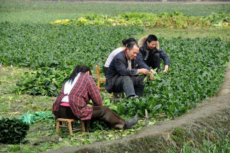 Download Pengzhou, China: Farm Family Working In Field Editorial Photography - Image: 18266107
